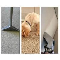 Carpet Cleaning Beginners 2 Day Course