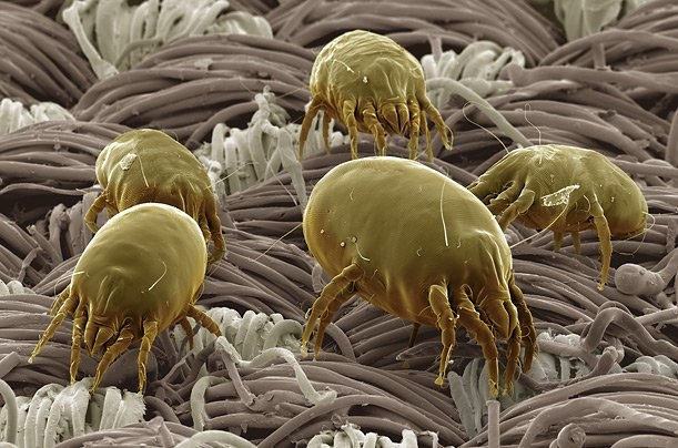 Textile Insect Pest E Course